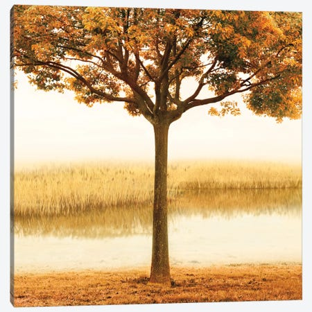 Golden Morning I Canvas Print #JOH33} by John Seba Art Print