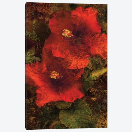 Hibiscus II Canvas Print #JOH37} by John Seba Canvas Art