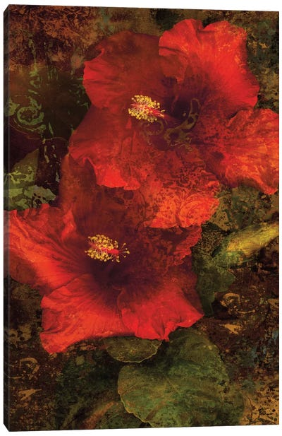 Hibiscus II Canvas Art Print