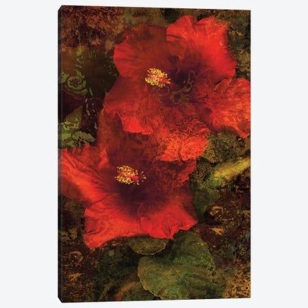 Hibiscus II Canvas Print #JOH37} by John Seba Canvas Art