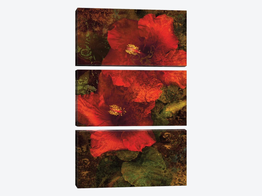 Hibiscus II by John Seba 3-piece Canvas Art Print