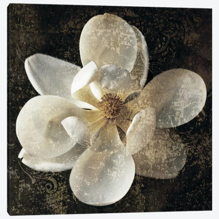 Magnolia I Canvas Print #JOH42} by John Seba Canvas Art