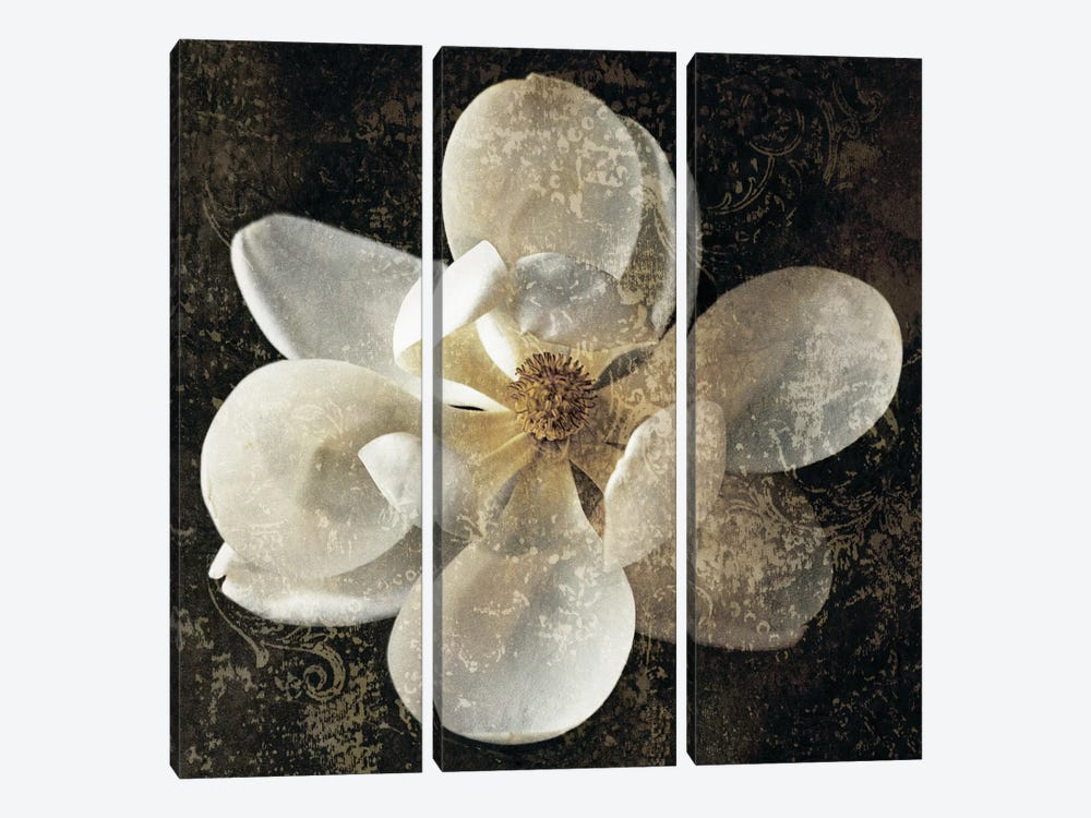 Magnolia I by John Seba 3-piece Canvas Print