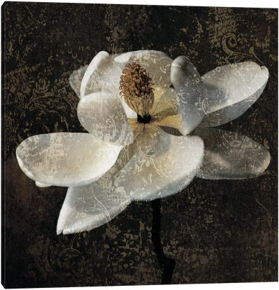 Magnolia II Canvas Art Print