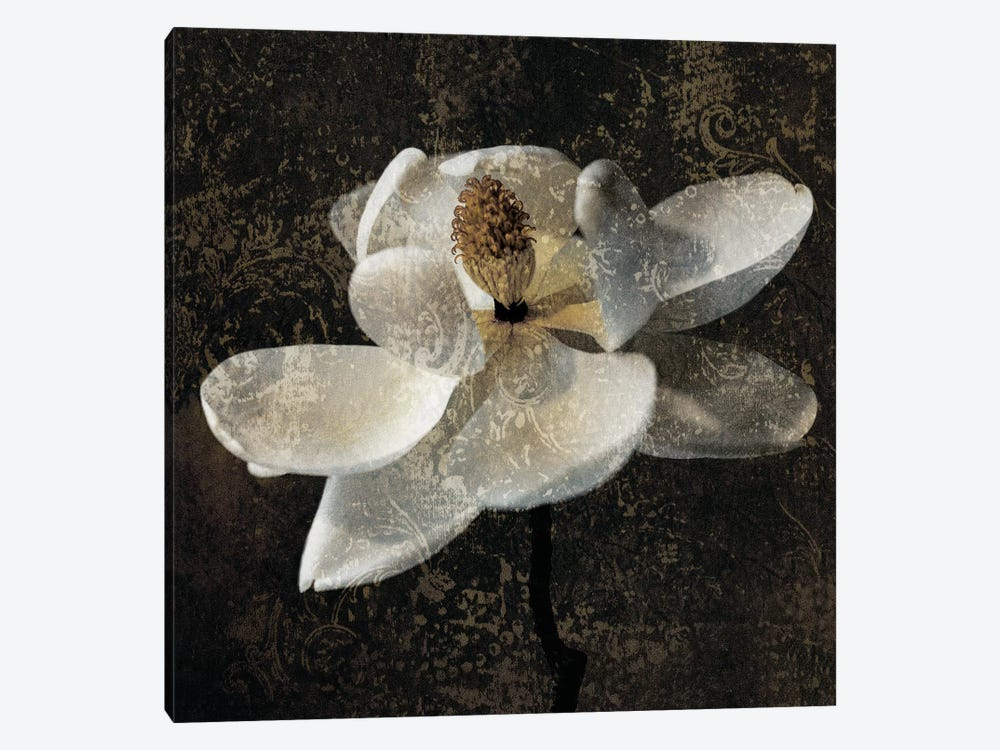 Magnolia II by John Seba 1-piece Canvas Wall Art