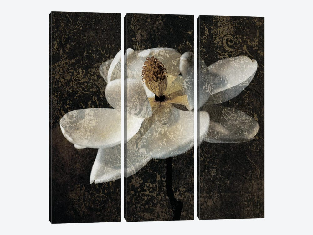 Magnolia II by John Seba 3-piece Canvas Art