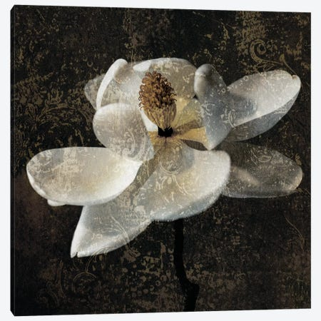 Magnolia II Canvas Print #JOH43} by John Seba Canvas Artwork