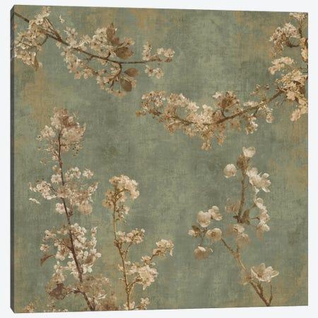 Morning Blossom I Canvas Print #JOH46} by John Seba Canvas Print