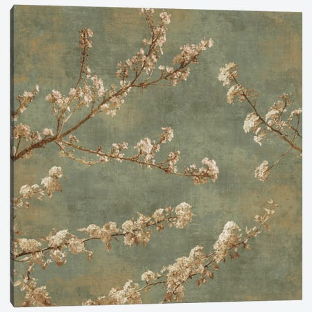 Morning Blossom II Canvas Print #JOH47} by John Seba Canvas Print