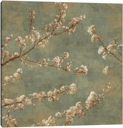 Morning Blossom II Canvas Art Print