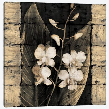 Orchids In Bloom I Canvas Print #JOH59} by John Seba Canvas Art Print