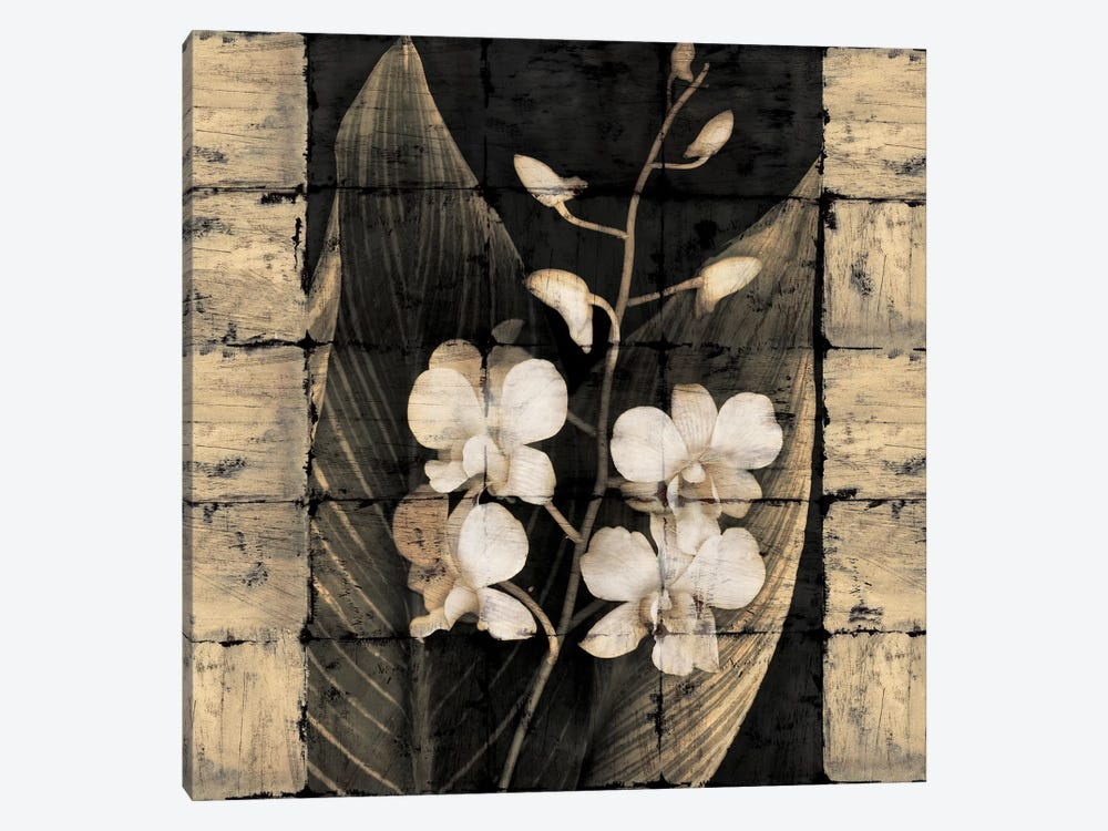 Orchids In Bloom I by John Seba 1-piece Canvas Art Print