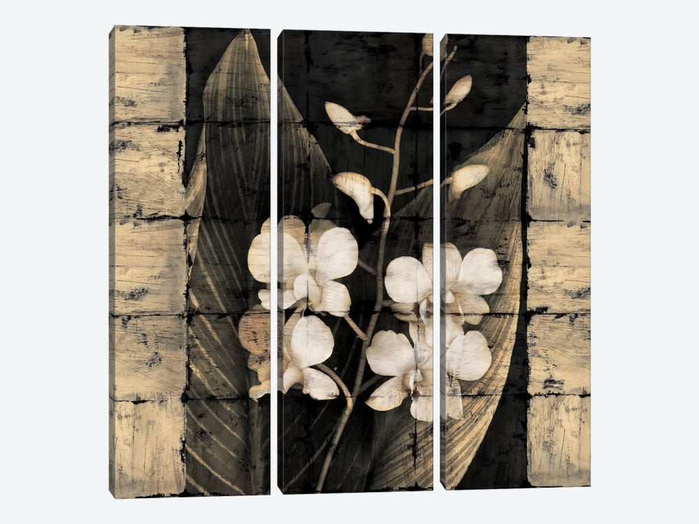Orchids In Bloom I by John Seba 3-piece Canvas Print