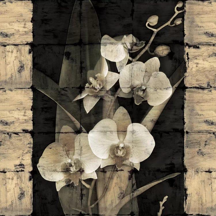 Orchids In Bloom Ii Canvas Wall Art By John Seba Icanvas