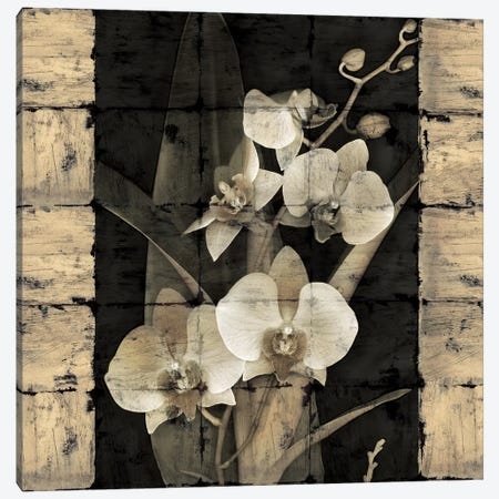 Orchids In Bloom II Canvas Print #JOH60} by John Seba Canvas Artwork