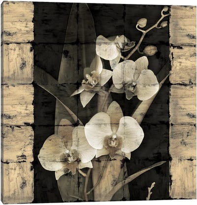 Orchids In Bloom II Canvas Art Print