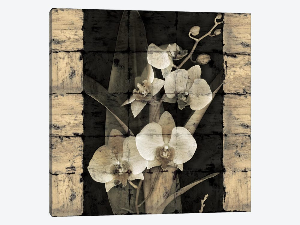 Orchids In Bloom II by John Seba 1-piece Art Print