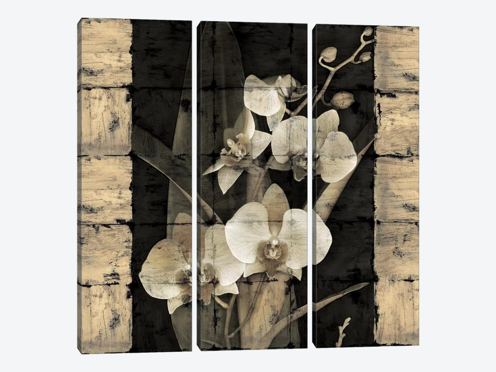 Orchids In Bloom II by John Seba 3-piece Canvas Print