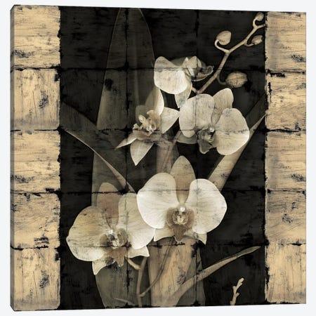 Orchids In Bloom II Canvas Print #JOH60} by John Seba Canvas Artwork