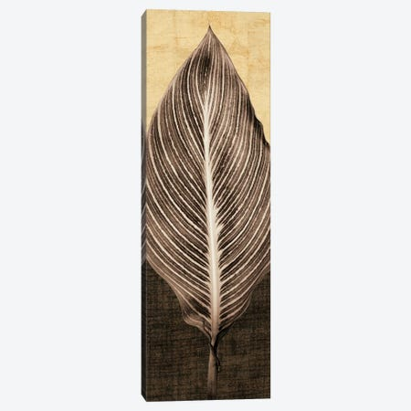 Palm Leaf I Canvas Print #JOH66} by John Seba Canvas Print