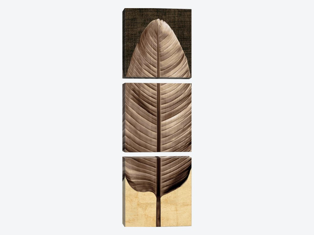 Palm Leaf II by John Seba 3-piece Canvas Wall Art