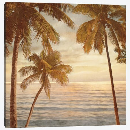 Palms On The Water II Canvas Print #JOH76} by John Seba Canvas Art