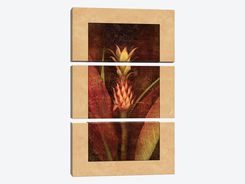 Pineapple by John Seba 3-piece Canvas Print