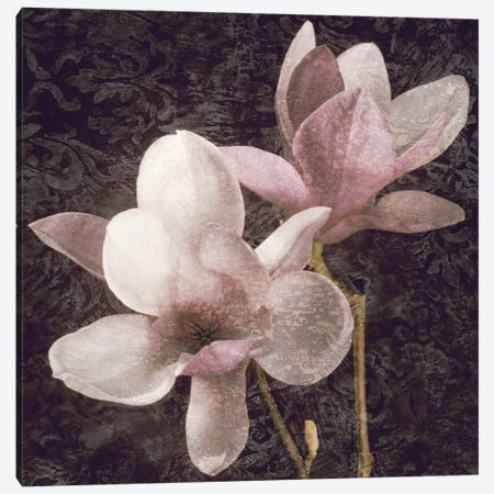 Pink Magnolias I Canvas Print #JOH80} by John Seba Canvas Wall Art