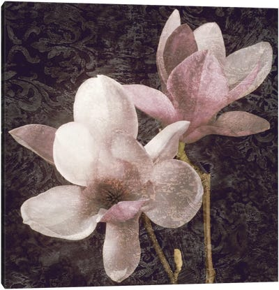 Pink Magnolias I Canvas Art Print