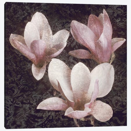 Pink Magnolias II Canvas Print #JOH81} by John Seba Canvas Art