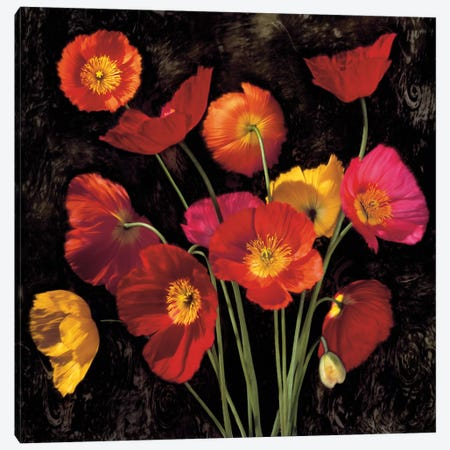 Poppy Bouquet II Canvas Print #JOH86} by John Seba Art Print