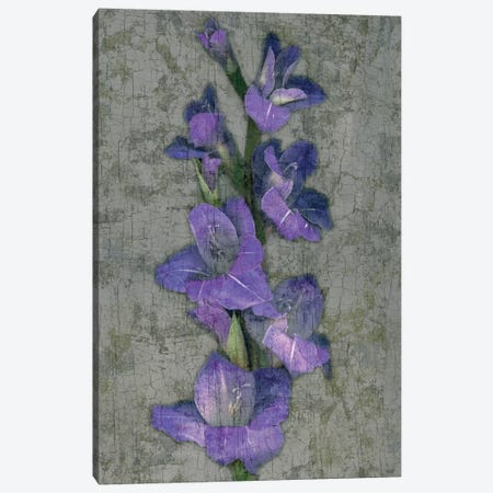Purple Gladiola Canvas Print #JOH87} by John Seba Art Print