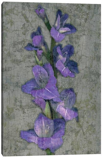 Purple Gladiola Canvas Print #JOH87
