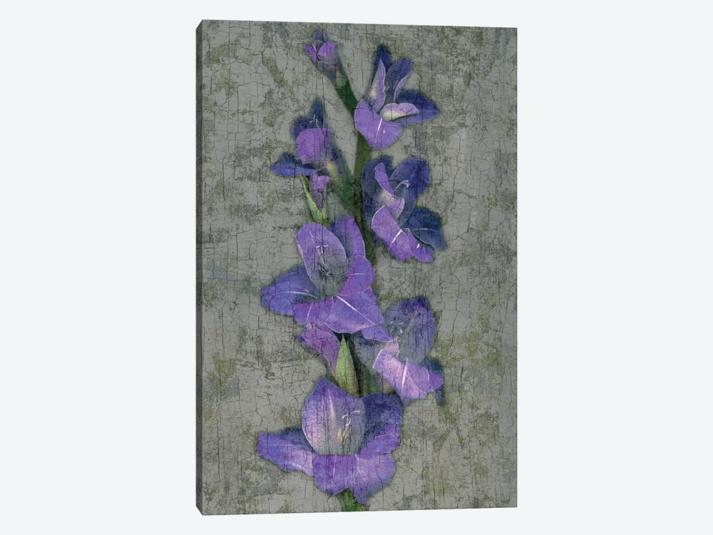 Purple Gladiola 1-piece Canvas Wall Art