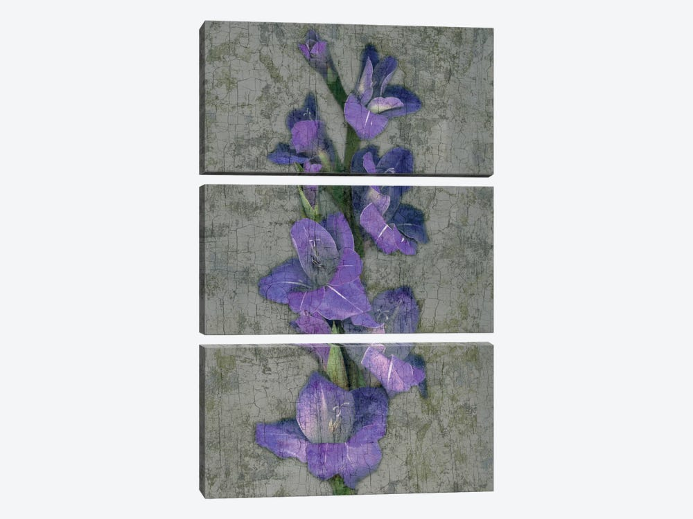 Purple Gladiola 3-piece Canvas Wall Art