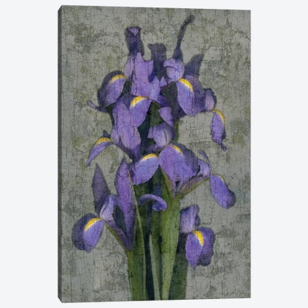 Purple Iris Canvas Print #JOH88} by John Seba Canvas Wall Art