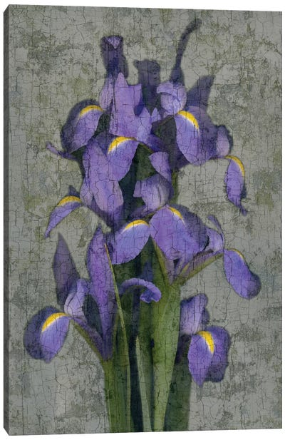 Purple Iris Canvas Art Print