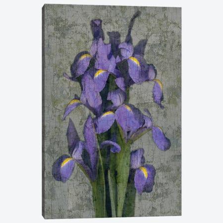 Purple Iris Canvas Print #JOH88} by John Seba Canvas Wall Art