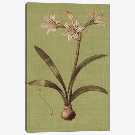 Botanica Verde I Canvas Print #JOH8} by John Seba Canvas Art