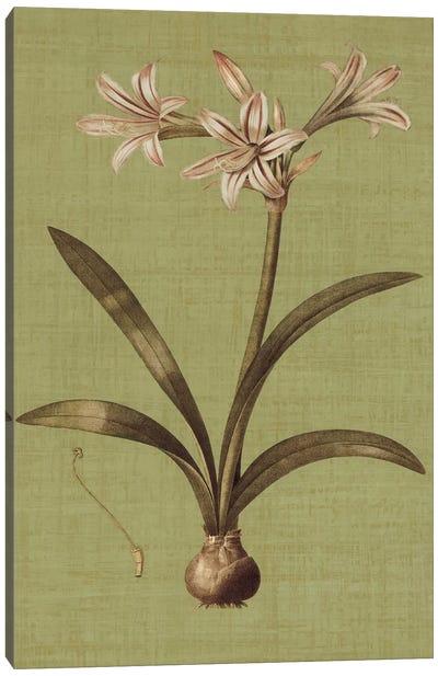 Botanica Verde I Canvas Print #JOH8