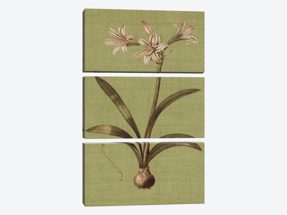 Botanica Verde I by John Seba 3-piece Canvas Wall Art