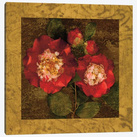 Red Camellias II Canvas Print #JOH90} by John Seba Canvas Print