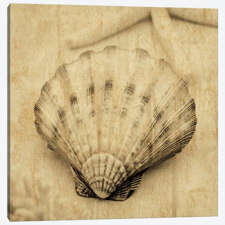 Scallop Canvas Print #JOH96} by John Seba Canvas Wall Art