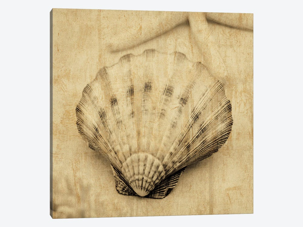Scallop 1-piece Canvas Wall Art