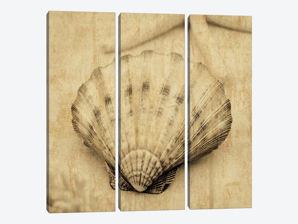 Scallop 3-piece Canvas Art