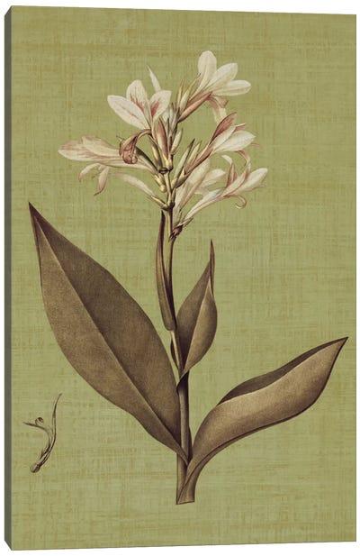 Botanica Verde II Canvas Print #JOH9