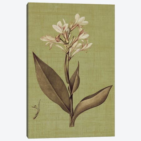 Botanica Verde II Canvas Print #JOH9} by John Seba Canvas Wall Art