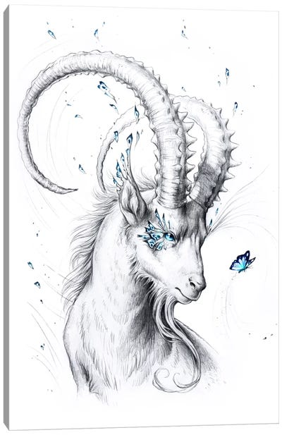 Capricorn Canvas Art Print