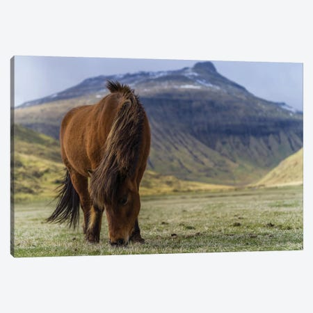 One Horse At The Faroe Islands Canvas Print #JOR100} by Anders Jorulf Canvas Art Print