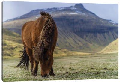 One Horse At The Faroe Islands Canvas Art Print